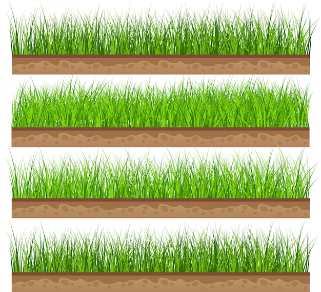 Set green grass with isolated. vector illustration