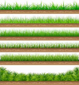 Set green grass with isolated