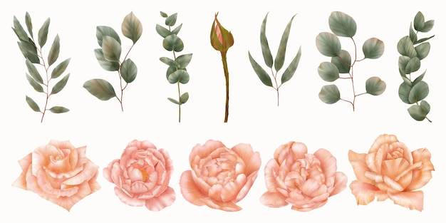 Set of green leaves and pink roses