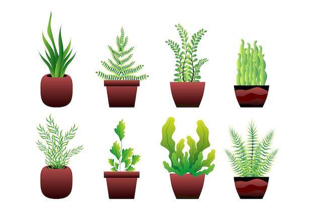 Set of green plant pot
