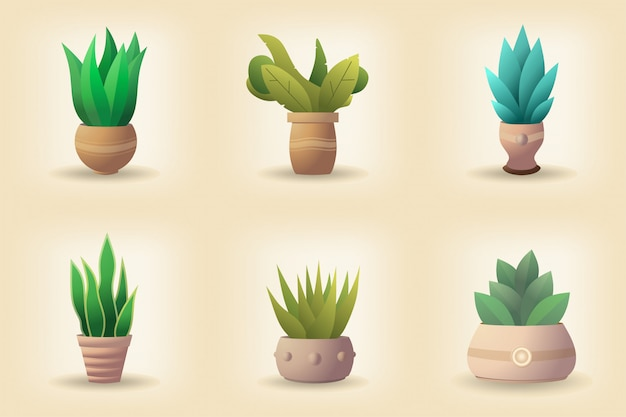 Set of green plant in a pot