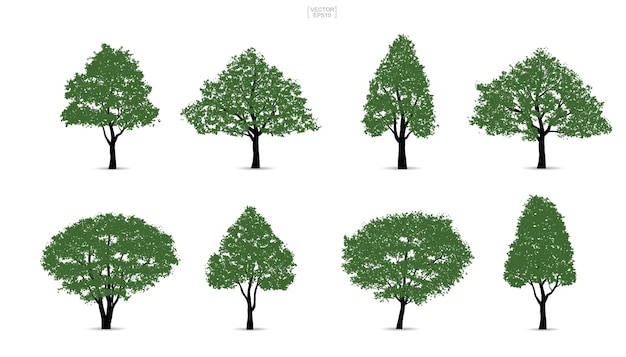 Set of green tree.