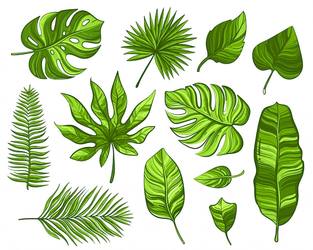 Set of green tropical palm leaves