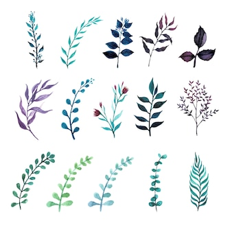 Set of greenery leaf plant in watercolor style