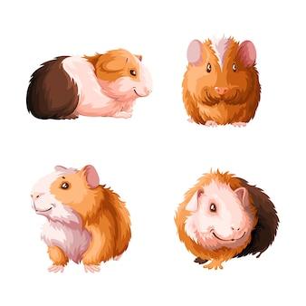 Set of guinea pigs.