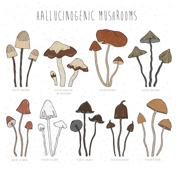 Набор галлюциногенных грибов цветная иллюстрация