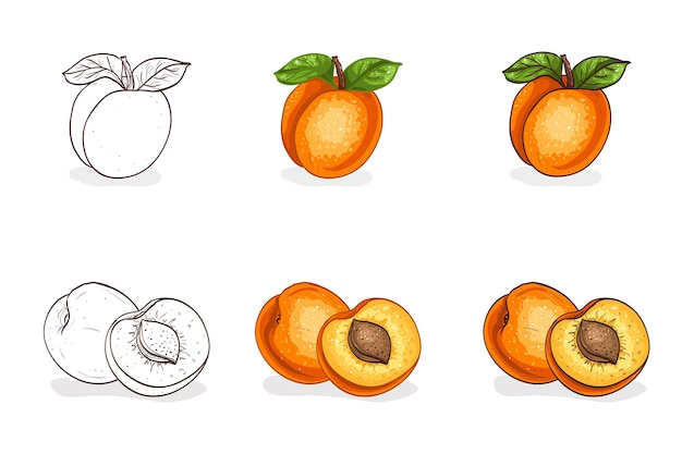 Set of hand drawn apricots isolated on white