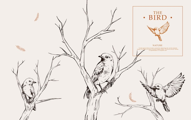 Set of hand drawn bird in branches with vintage style