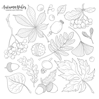 Set of hand drawn black and white autumn falling leaves and berries