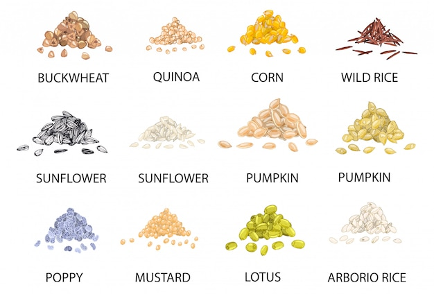 Set of hand drawn colored piles of cereal grains.