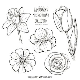 Set of hand-drawn daisies