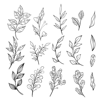 Set of hand drawn floral branches and leaves elements on white background.