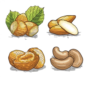 Set of hand drawn illustrations of nuts, walnut, hazelnut, cashew, and almond.