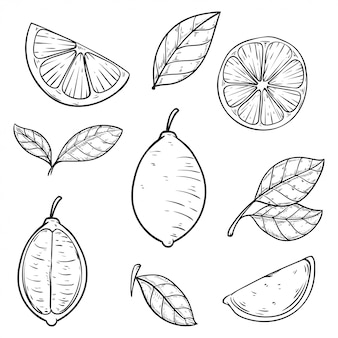Set hand drawn lime vector