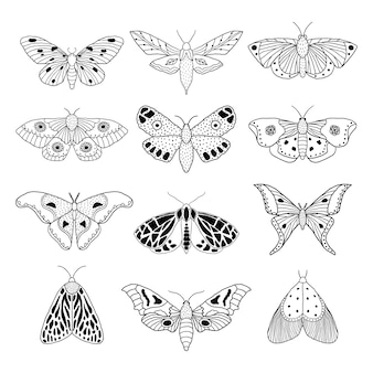 Set of hand drawn moths