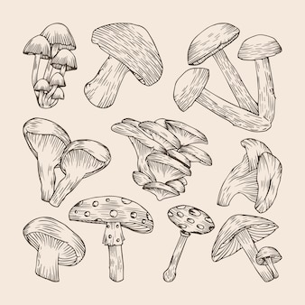 Set of hand drawn mushrooms collections