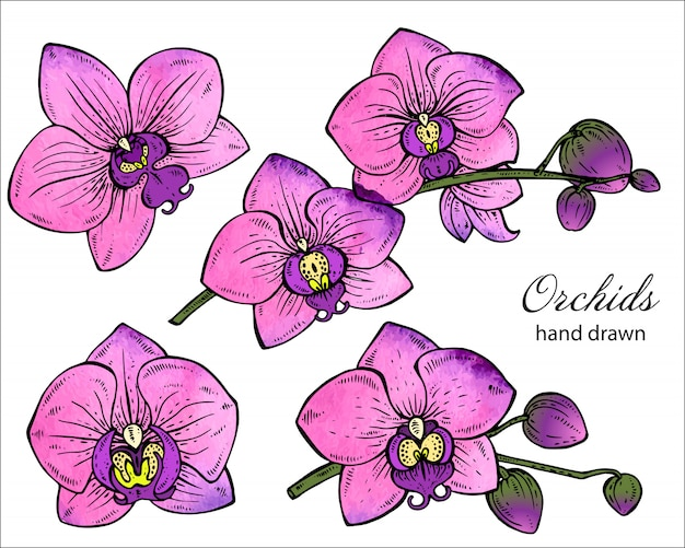 Set of hand drawn orchid branches with flowers.