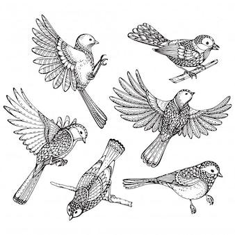 Set of hand drawn ornate birds