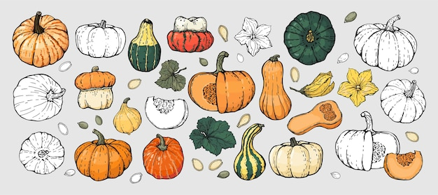 A set of hand-drawn pumpkin sketches.  black outline, white background, isolated.