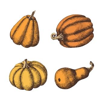 Set of  hand drawn pumpkins. autumn. vector vintage engraving illustration. sketch.