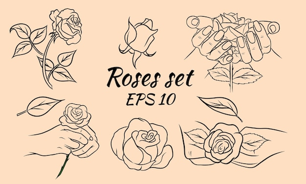 Set of hand drawn roses, rosebuds and leaves. roses line. decoration and decorations. set of vector illustrations.