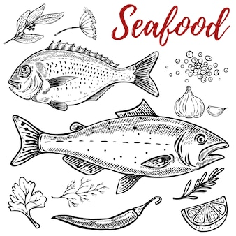 Set of hand drawn seafood illustrations  on white background.  elements for poster, emblem, restaurant menu.  illustration