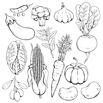 Set of hand drawn or sketch fresh vegetables
