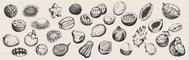 Set of hand drawn tropical fruits  from thailand on white background.