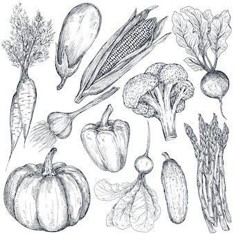 Set of hand drawn vector farm vegetables in sketch style eggplant pepper onion cabbage corn