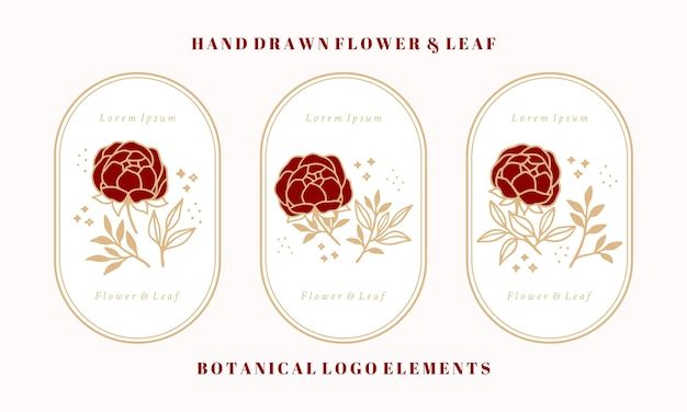 Set of hand drawn vintage botanical peony flower and leaf branch elements for feminine logo and beauty brand