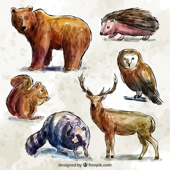 Set of hand drawn watercolor forest animals