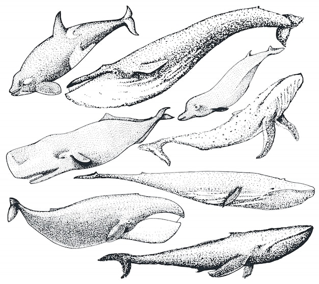 Set of hand drawn whales