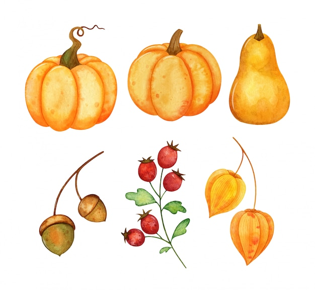 Set of hand painted watercolor pumpkins and different plants isolated