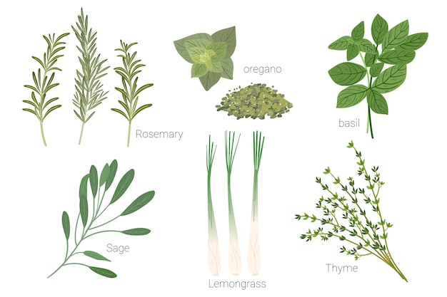 Set of herbs  drawing