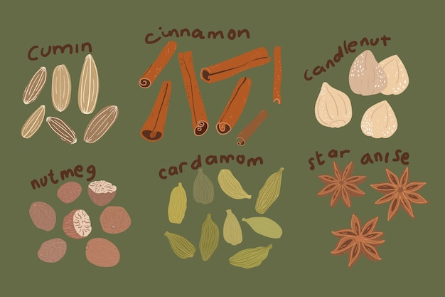 Set of herbs and spice drawing