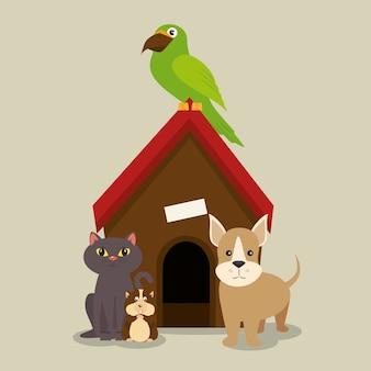 Set of home animals pets