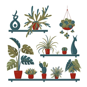 Set of home plants and decorative elements on the shelves