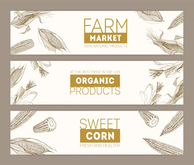 Set of horizontal banners with realistic cobs of sweet corn or corncobs hand drawn with contour lines on white background