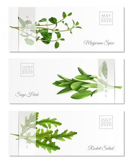 Set of horizontal banners with realistic herbs on white  with transparent ribbon isolated
