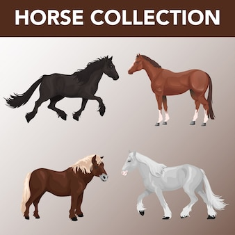 Set of horse breeds collection