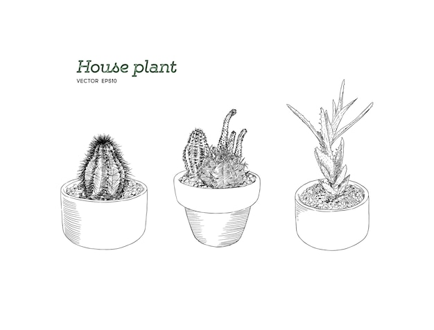 Set of house plant in pot, hand draw sketch vector.