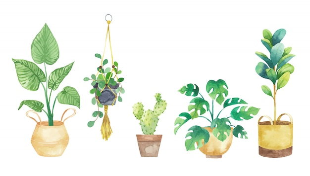 Set houseplants in pots painted in watercolor. potted plants set. vector illustration