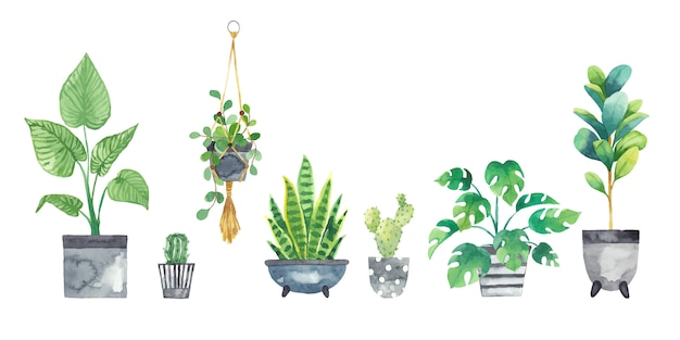 Set houseplants in pots painted in watercolor