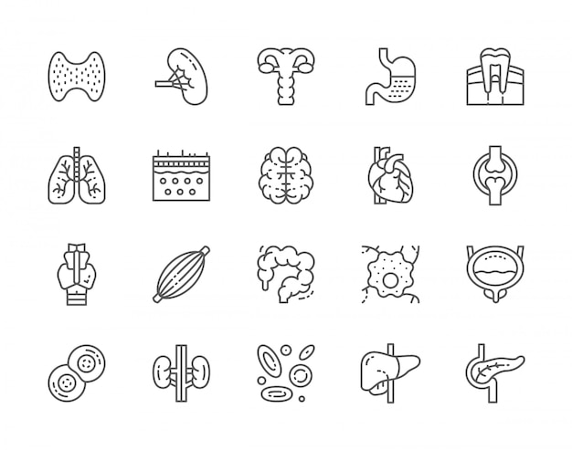 Set of human organs line icons.