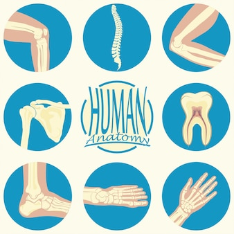 Set of humane joints
