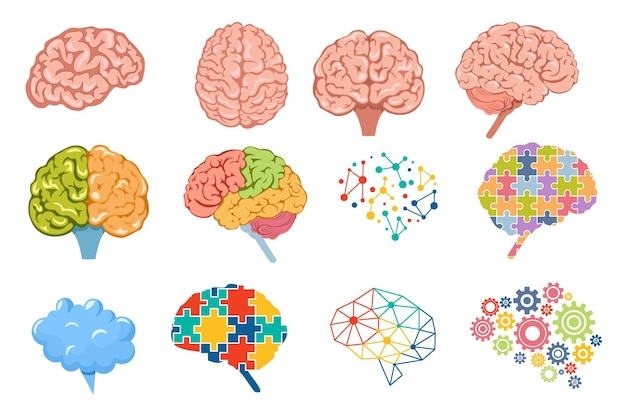 Set of icons human brain, neurology, anatomy science elements. body organ front, top and side view with convolutions