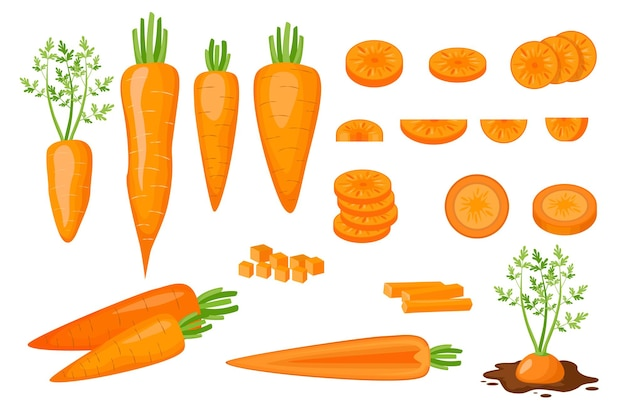 Set of icons raw carrots half, sliced, diced and cut into strips and slices. fresh organic and healthy vegetarian vegetables growing in soil isolated on white background. cartoon vector illustration
