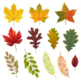 Set of icons with various types of leaves.