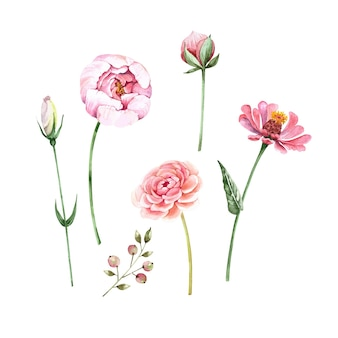 Set of illustrations of pink flowers buds and plants vector watercolor