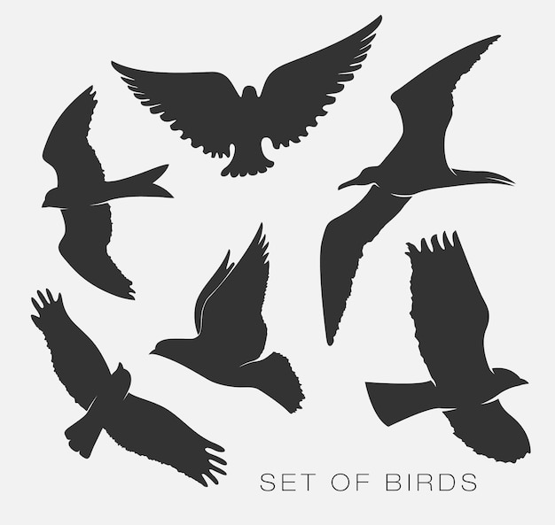 Set of illustrations silhouettes of birds gulls.